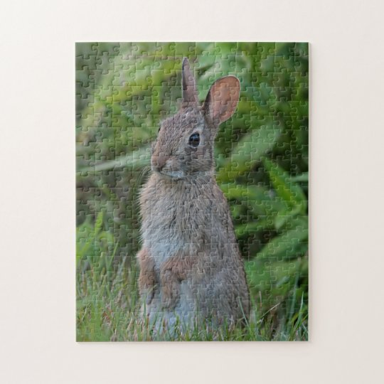 Cottontail rabbit sitting up puzzles