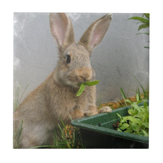 Cottontail Rabbit Tile
