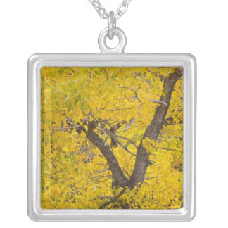 Cottonwood tree in peak fall colors in Glacier Silver Plated Necklace