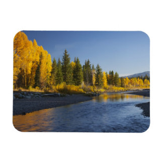 Cottonwood trees reflected in Pacific Creek Magnet
