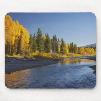 Cottonwood trees reflected in Pacific Creek Mouse Mat