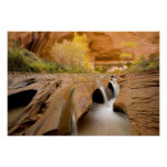 Cottonwoods in Autumn, Coyote Gulch, Glen Poster