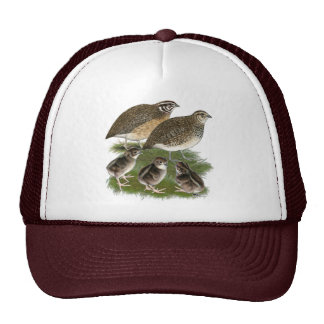 Coturnix Quail Family Mesh Hats