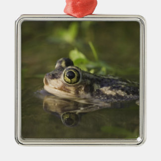 Couch's Spadefoot, Scaphiopus couchii, adult, 2 Christmas Ornament