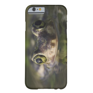Couch's Spadefoot, Scaphiopus couchii, adult, Barely There iPhone 6 Case