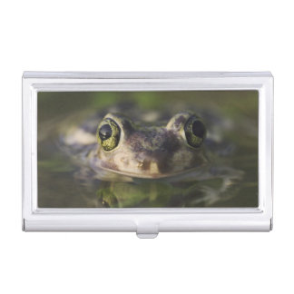 Couch's Spadefoot, Scaphiopus couchii, adult, Business Card Holder