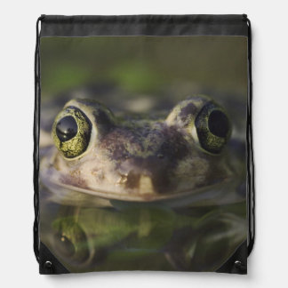 Couch's Spadefoot, Scaphiopus couchii, adult, Drawstring Bag
