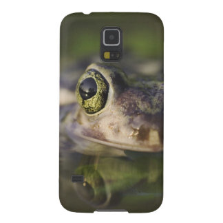 Couch's Spadefoot, Scaphiopus couchii, adult, Galaxy S5 Cases