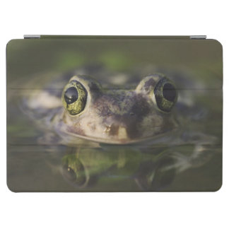 Couch's Spadefoot, Scaphiopus couchii, adult, iPad Air Cover