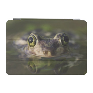 Couch's Spadefoot, Scaphiopus couchii, adult, iPad Mini Cover