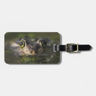 Couch's Spadefoot, Scaphiopus couchii, adult, Luggage Tag