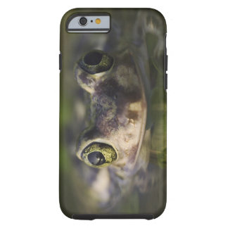 Couch's Spadefoot, Scaphiopus couchii, adult, Tough iPhone 6 Case