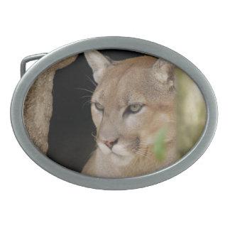 Cougar 013 oval belt buckle