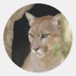 Cougar 013 round stickers