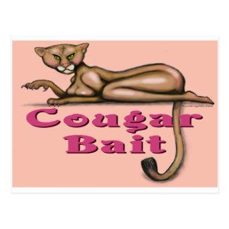 Cougar Bait Post Card