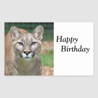 Cougar beautiful  happy birthday sticker, stickers