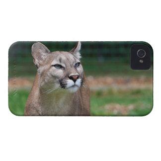 Cougar beautiful photo blackberry bold case