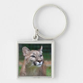 Cougar beautiful photo keyring, keychain