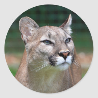 Cougar beautiful photo sticker,  stickers