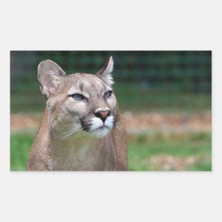 Cougar beautiful photo sticker, stickers, gift rectangular sticker