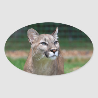 Cougar beautiful photo sticker, stickers, gift oval sticker