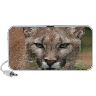 cougar confidence and peace mini speakers