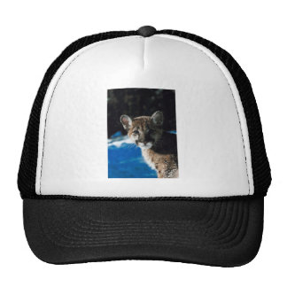 Cougar Cub Mesh Hats