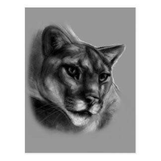 Cougar Drawing Post Card
