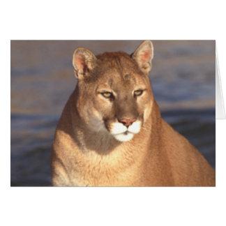 Cougar Face Greeting Card