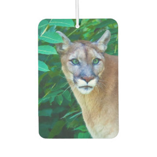 Cougar in the Jungle