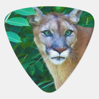 Cougar in the Jungle Plectrum