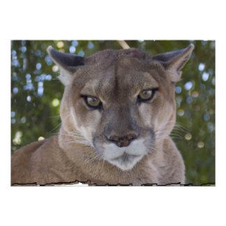Cougar Invitation