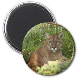 Cougar Keychain 6 Cm Round Magnet