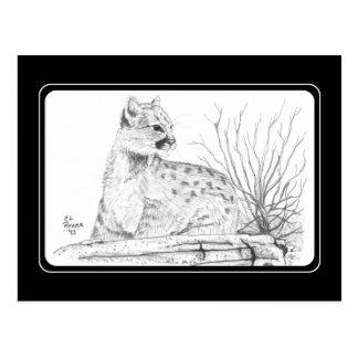 Cougar Kitten Postcard