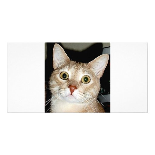 COUGAR KITTY PHOTO CARDS