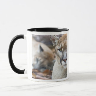 Cougar, mountain lion, Florida panther, Puma 2 Mug