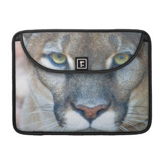 Cougar, mountain lion, Florida panther, Puma 2 Sleeve For MacBooks