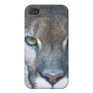 Cougar, mountain lion, Florida panther, Puma iPhone 4 Cover