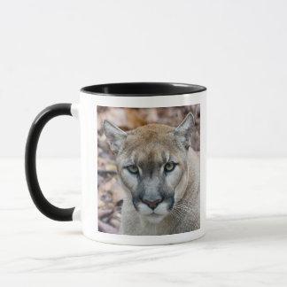 Cougar, mountain lion, Florida panther, Puma Mug