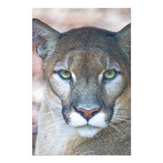 Cougar, mountain lion, Florida panther, Puma Photograph