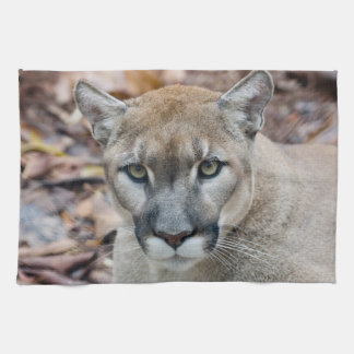 Cougar, mountain lion, Florida panther, Puma Tea Towel