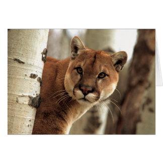 Cougar Photograph Greeting Card