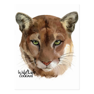 """Cougar"" Postcard"