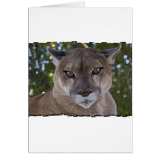 Cougar Pounce Greeting Card