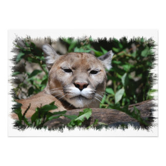 Cougar Predator Invitation