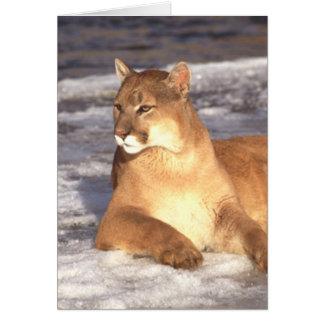 Cougar Rest Card