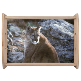 Cougar sitting serving tray