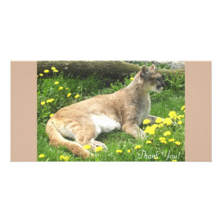 Cougar With Tree and Dandilions Personalized Photo Card