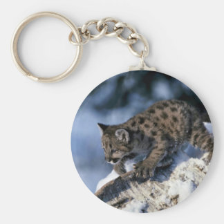 Cougar-young cub in a snowy tree keychain