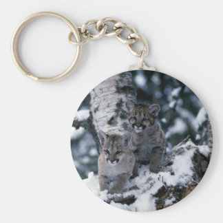 Cougars-young cubs in snowy tree keychain